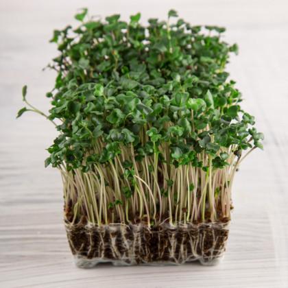 BIO řeřicha Kresso - Lepidium sativum - bio osivo řeřichy - 150 ks