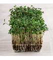 BIo řeřicha Kresso - bio semena řeřichy - 0,5 gr