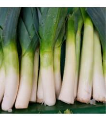 Pór Megaton F1 - prodej BIO semen póru - kvalitní bio osiva pórku - 10 ks