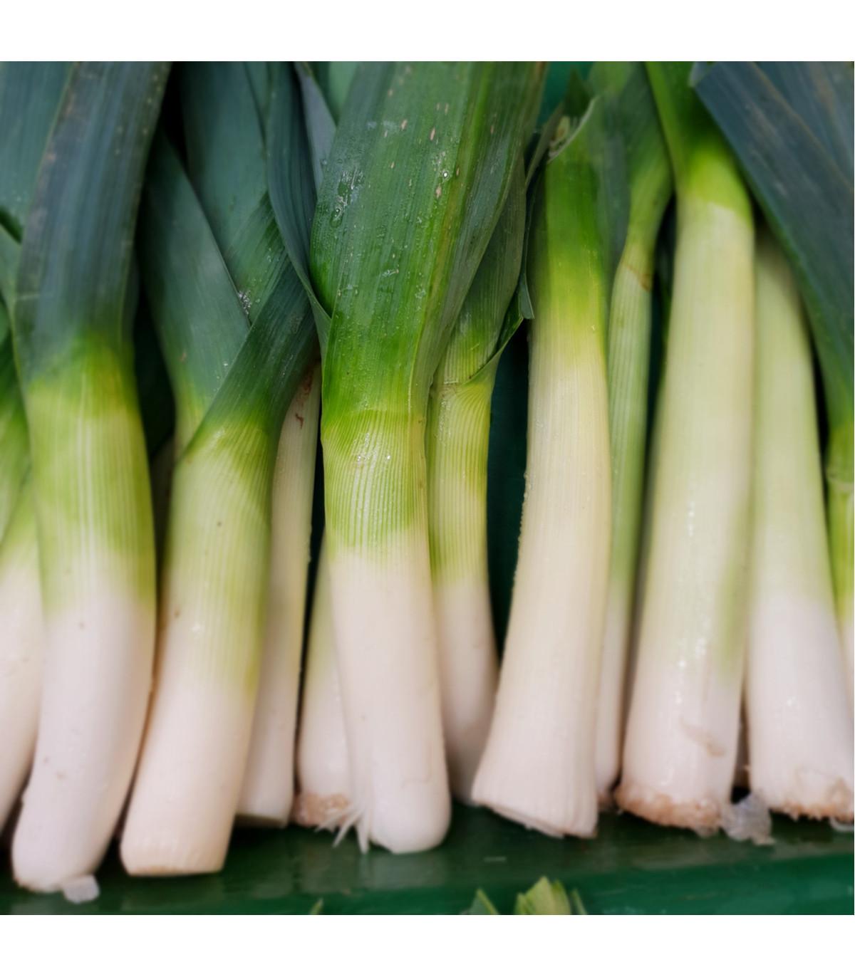 Pór Megaton F1 - prodej BIO semen póru - kvalitní bio osiva pórku - 20 ks