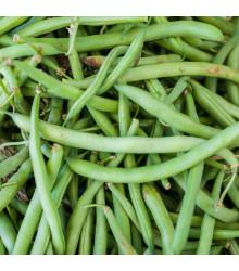 BIO fazole keříčková Maxi - Phassseolus vulgaris - prodej bio semen - 20 ks