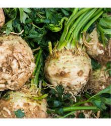 BIO Celer bulvový Princ - Alpium graveolens - bio semena celeru - 20 ks