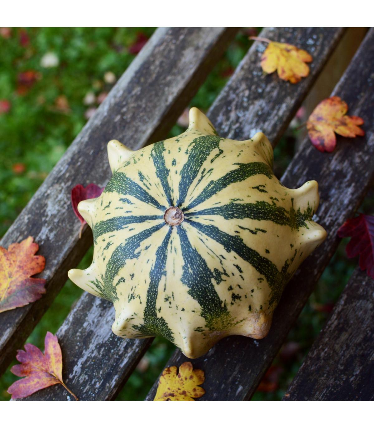 Okrasné tykvičky Koruna směs - prodej okrasných tykviček - semena - 40 ks