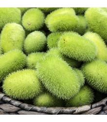 Okurka Ježek - Cucumis dipsaceus - osivo okrasné okurky - 6 ks