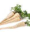 Petržel kořenová - prodej semen petržele - 1 gr