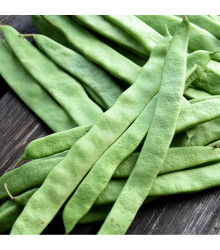 Fazol tyčkový Algarve - Phaseolus vulgaris - semena fazole - 20 ks