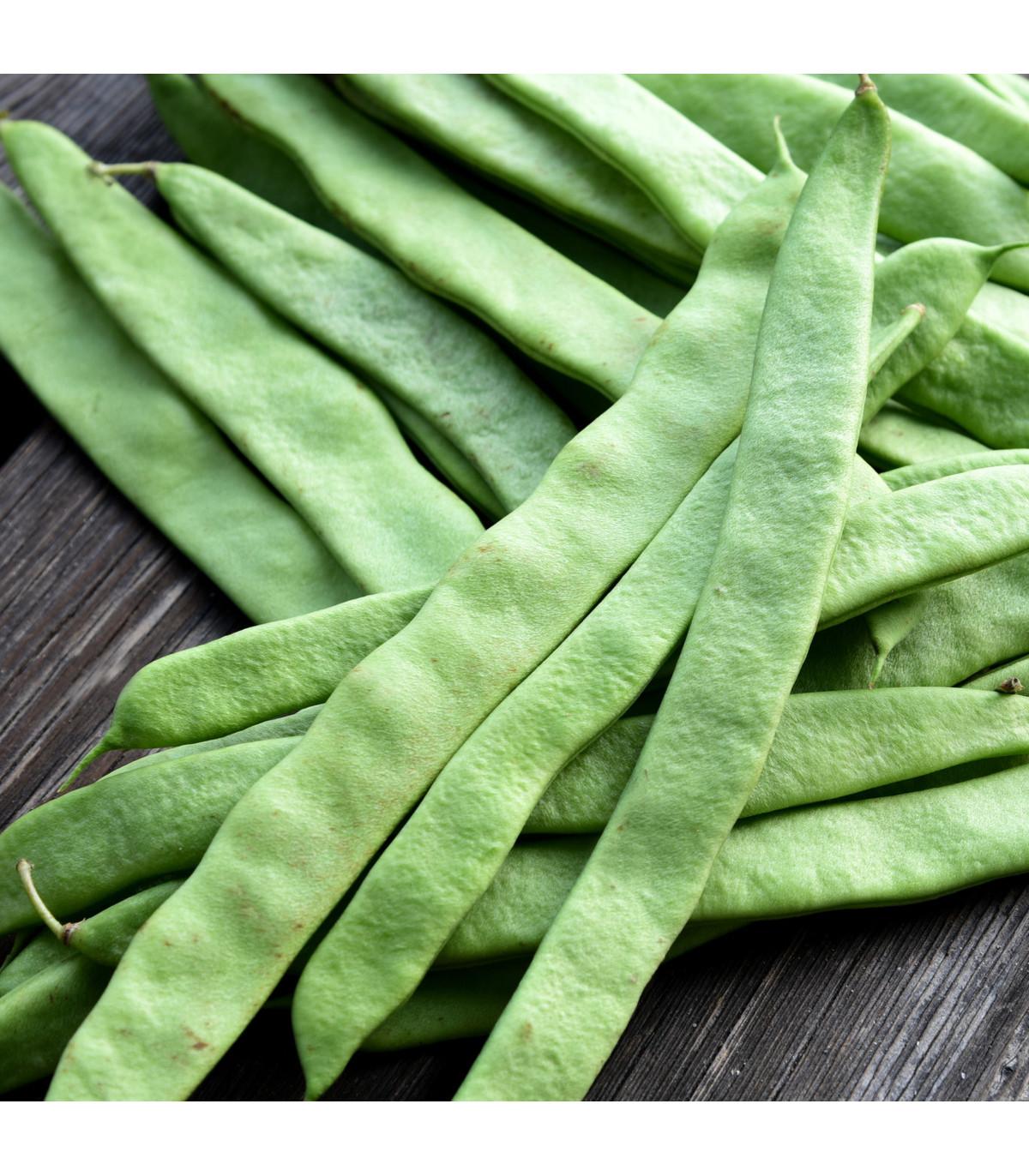 Fazol tyčkový Algarve - Phaseolus vulgaris  - prodej semen fazole - 8 ks
