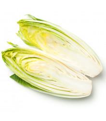 Čekanka belgická Di Bruxelles - prodej semen čekanky - Cichorium intybus - 0,5 gr