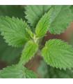 Kopřiva dvoudomá - rostlina Urtica dioica - prodej semen kopřivy - 0,5 gr