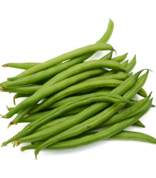 Fazol keříčkový Saxa - Phaseolus vulgaris - osivo fazolu - 20 ks