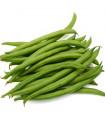 Fazol krříčkový Saxa - Phaseolus vulgaris - prodej semen - 3 gr