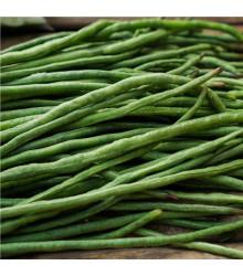 Fazol keříčkový Odeon - Phaseolus vulgaris var. nanus - semena fazolu - 20 ks
