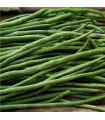 Fazol keříčkový Odeon - prodej semen fazole - 8 ks