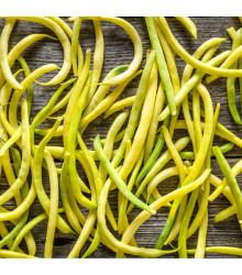Fazol keříčkový Golddukat - Phaseolus vulgaris - semena fazolu - 20 ks