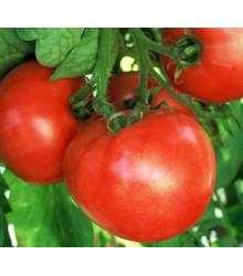 Rajče raný zázrak - semena rajčat - původní odrůdy rajčat - 6 ks