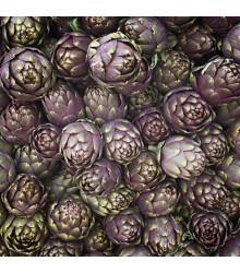 Artyčok fialový - Cynara scolymus - osivo artyčoku - 15 ks