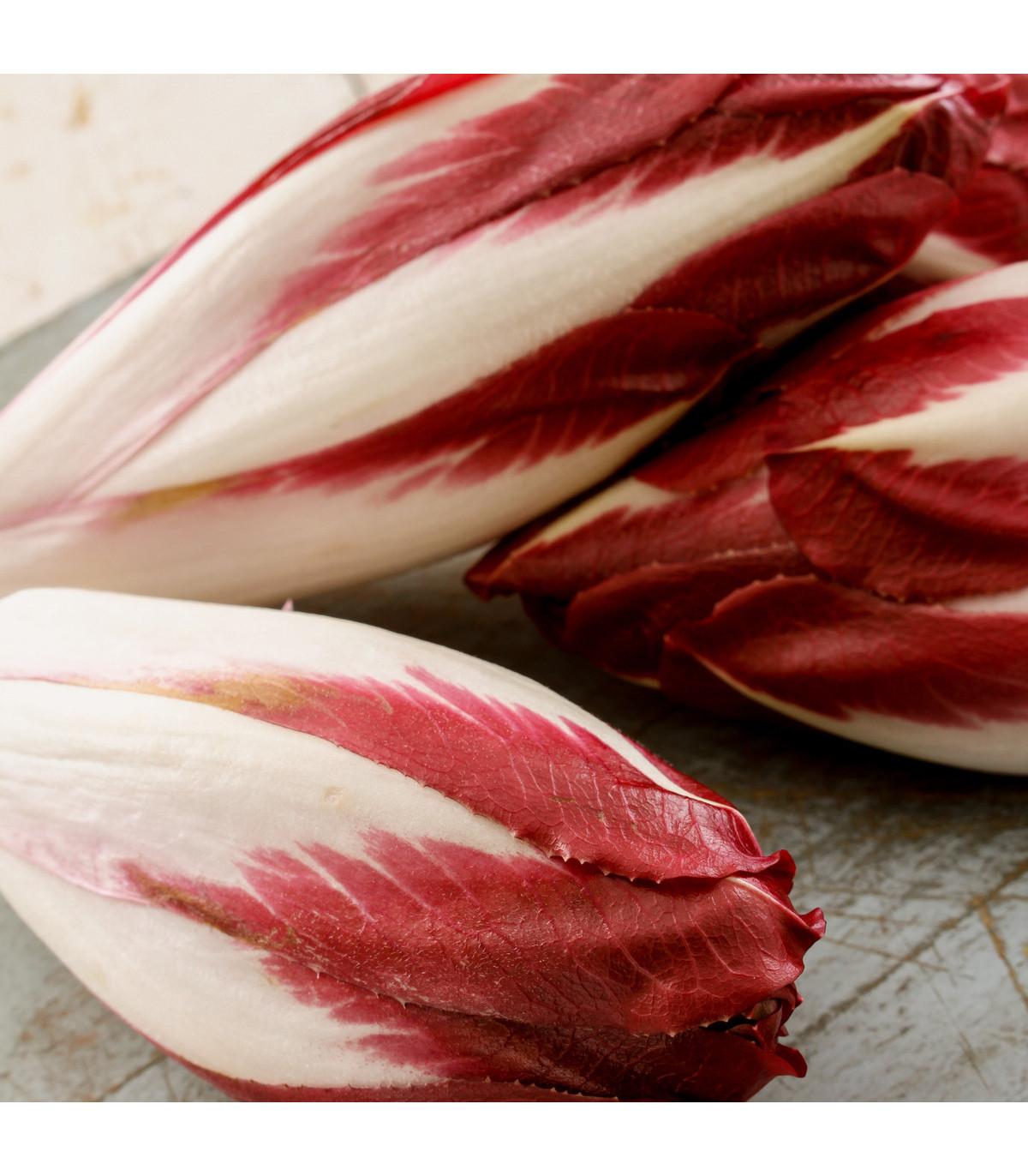 čekanka salátová Palla rosa - Cichorium intybus - prodej osiva čekanky - 200 ks