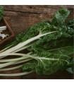 Mangold Lucullus - Beta vulgaris - semena mangoldu - 200 ks