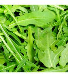 Roketa setá Viktoria- rostlina Eruca vesicaria - prodej semen - 0,5 gr