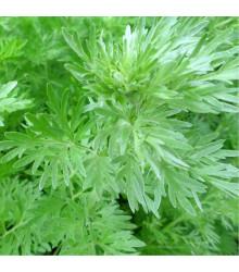More about Pelyněk pravý - Artemisia absinthum - semena pelyňku - 0,02 g