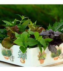 More about Aromatické byliny a koření - směs - semena aromatických bylin - 0,5 g