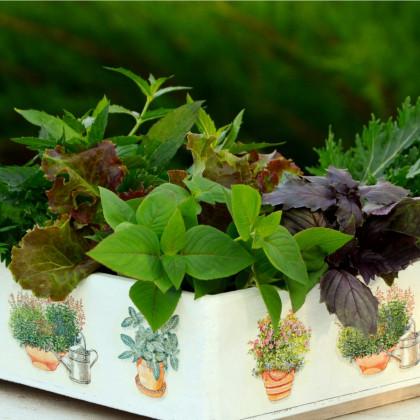 Aromatické byliny - směs - semena bylin - 0,5 g