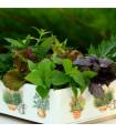 Aromatické byliny - směs - semena bylin - 0,2 g