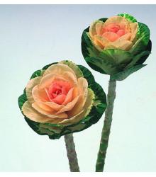 Okrasné zelí Sunrise - Brassica oleracea - prodej semen  - 20 ks