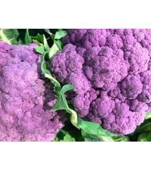 Květák fialový Grafitti F1 - Brassica oleracea L. convar. botrys - osivo květáku - 10 ks