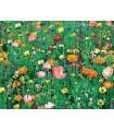 Letničky směs - Japonská zahrada - nízké letničky semena - 50 ks