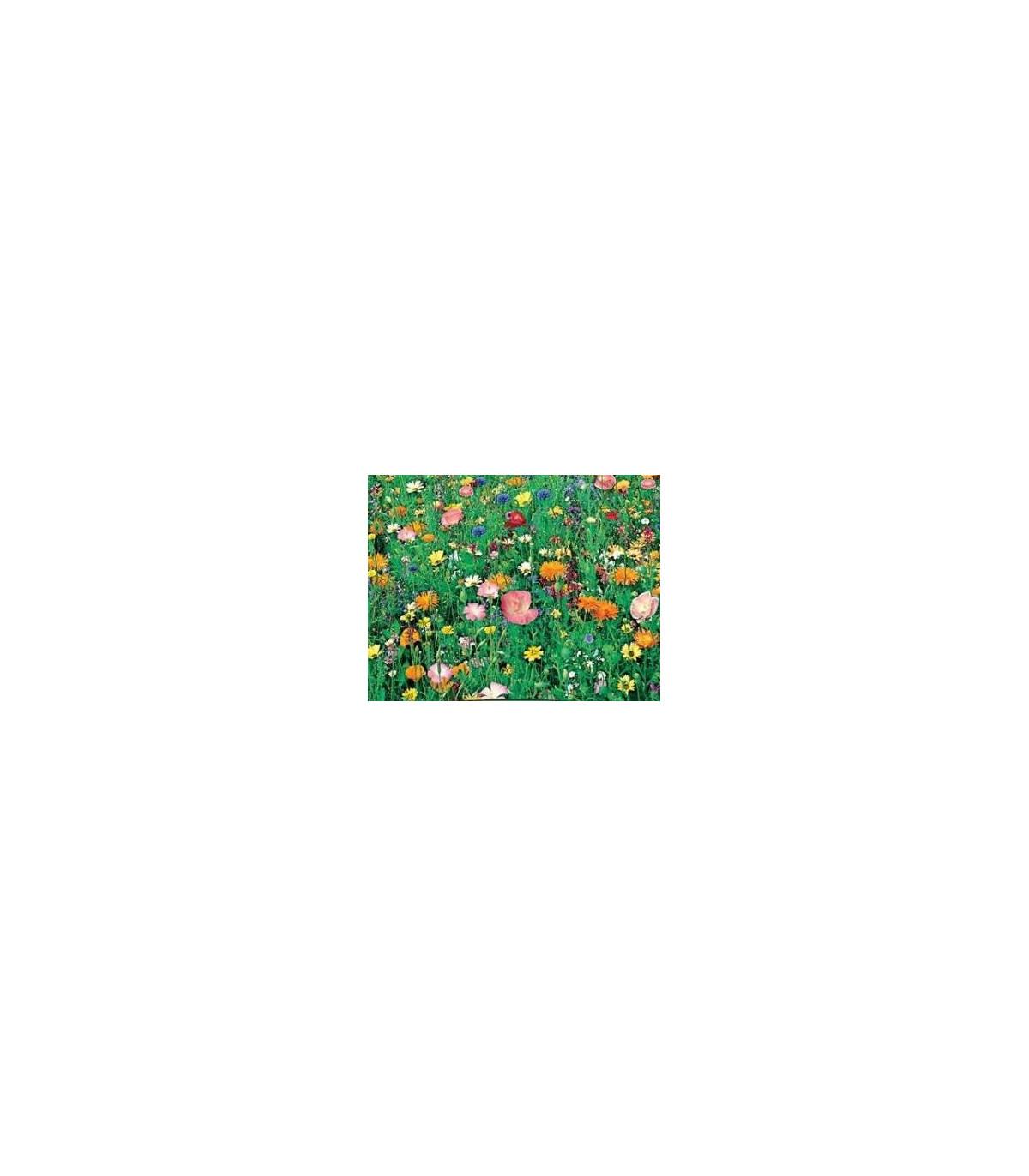Letničky Japonská zahrada - směs - osivo letniček - 0,9 g