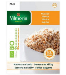 BIO pšenice - Bio semena pšenice na klíčky - 40 g