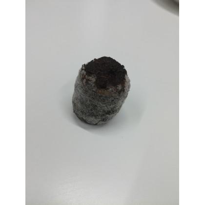 Velké sadbovací tablety - Jiffy - rašelinové zakořeňovače - vel. 33 mm - 1 ks