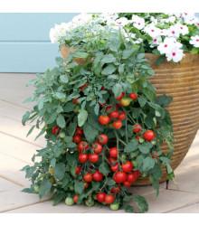 Cherry rajčátka Tumble - Lycopersicon esculentum - prodej semen rajčat - 6 Ks