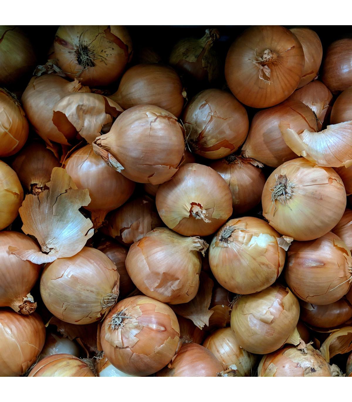 Cibule jarní bílá - semena Cibule - 250 ks