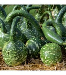 Indická okurka Lagenárie Dipper - Cucurbita Lagenaria - semena tykve - 6 ks