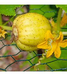 BIO okurka Lemon - Cucumis sativus - 8 ks