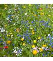 Květinová louka - Kiepenkerl - 1Kg pro 100 m2