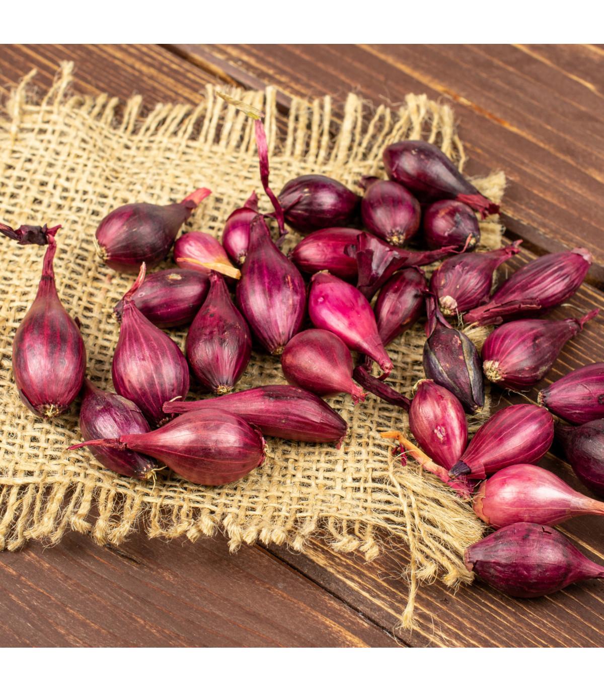 Cibule sazečka ozimá Rolein - Allium cepa - cibulky sazečky - 500 g