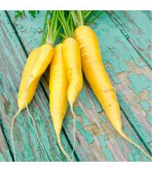 Mrkev Yellowstone - Daucus carota - semena mrkve - 0,5 g