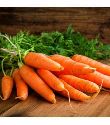 Mrkev Rotin - Daucus carota - osivo mrkve - 1 gr