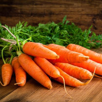 Mrkev Rotin - Daucus carota - osivo mrkve - 1,5 gr