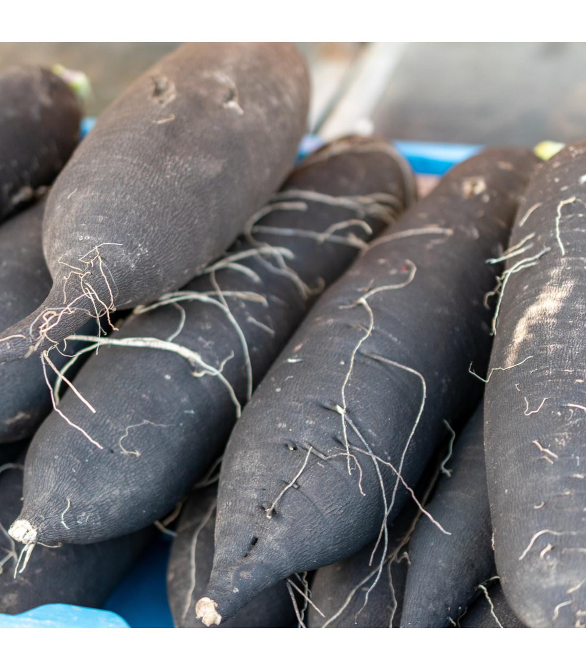 Ředkev setá dlouhá černá - Raphanus sativus niger - semena ředkve černé - 200 ks