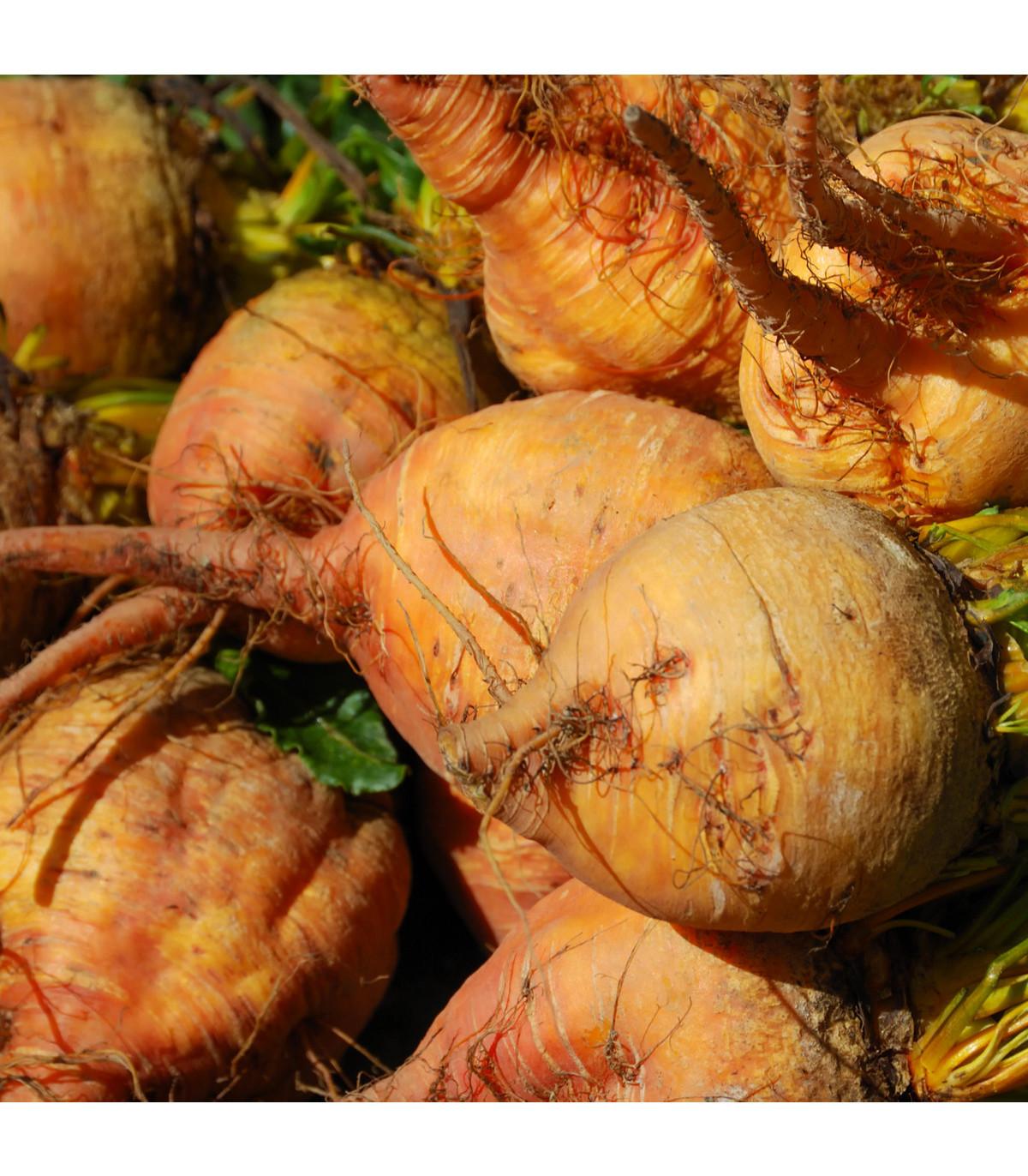 Ředkev salátová žlutá - Burpees Golden - prodej semen řepy - 1 gr