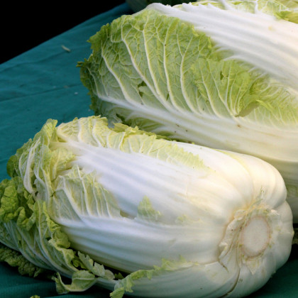 Zelí pekingské Granaat - Brassica pekinensis - osivo zelí - 200 ks