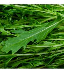Mizuna Waido - japonská hořčice - Brassica campestris Japonica - semena japonské hořčice Mizuna - 30 ks
