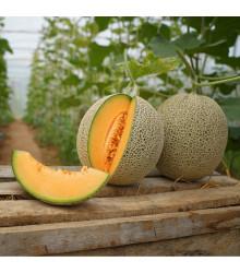 Meloun Cantaloupe F1 - Cucumis Melo - semena melounu - 5 ks