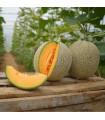 Meloun Cantaloupe - prodej semen melounu - 5 ks