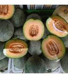 Meloun F1 Emir - Cucumis Melo - semena melounu - 6 ks