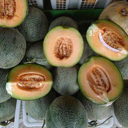 Meloun F1 Emir - Cucumis Melo - osivo melounu - 6 ks